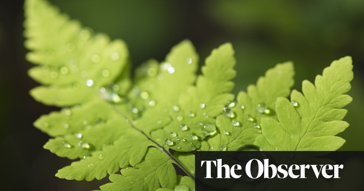 Don T Water Plants On Sunny Days Three Horticultural Myths