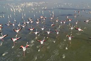 Adana, Turkey. A drone photo shows flamingos taking off in Akyatan Lagoon