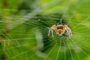 Hidden Britain category winner: Garden Spider by Alan Smith from Reading, Berkshire