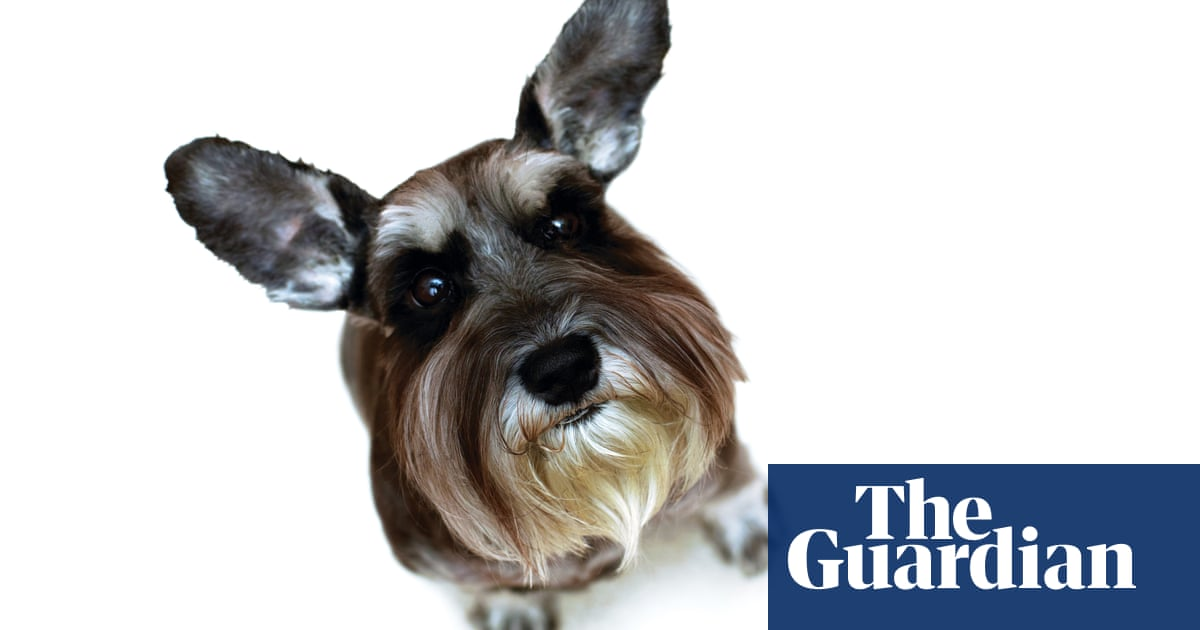 Should we stop keeping pets? Why more and more ethicists say