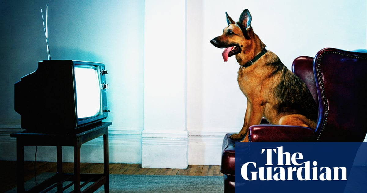 Fifteen Dogs By Andre Alexis Review A Smart Exuberant