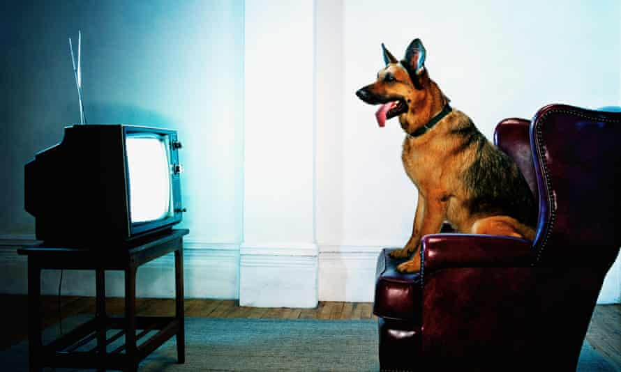 'Rosie, a German shepherd, finds herself wondering about her last litter.' Photograph: Getty Images
