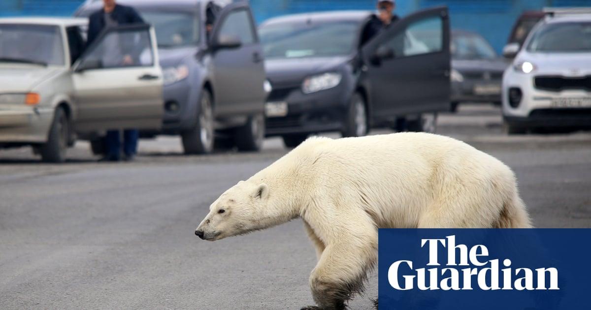 Human disturbance increasing cannibalism among polar bears