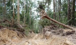 Logging trail in Borneo