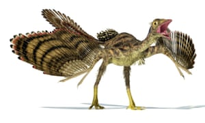 An archaeopteryx … dangerous, especially in crosswords.