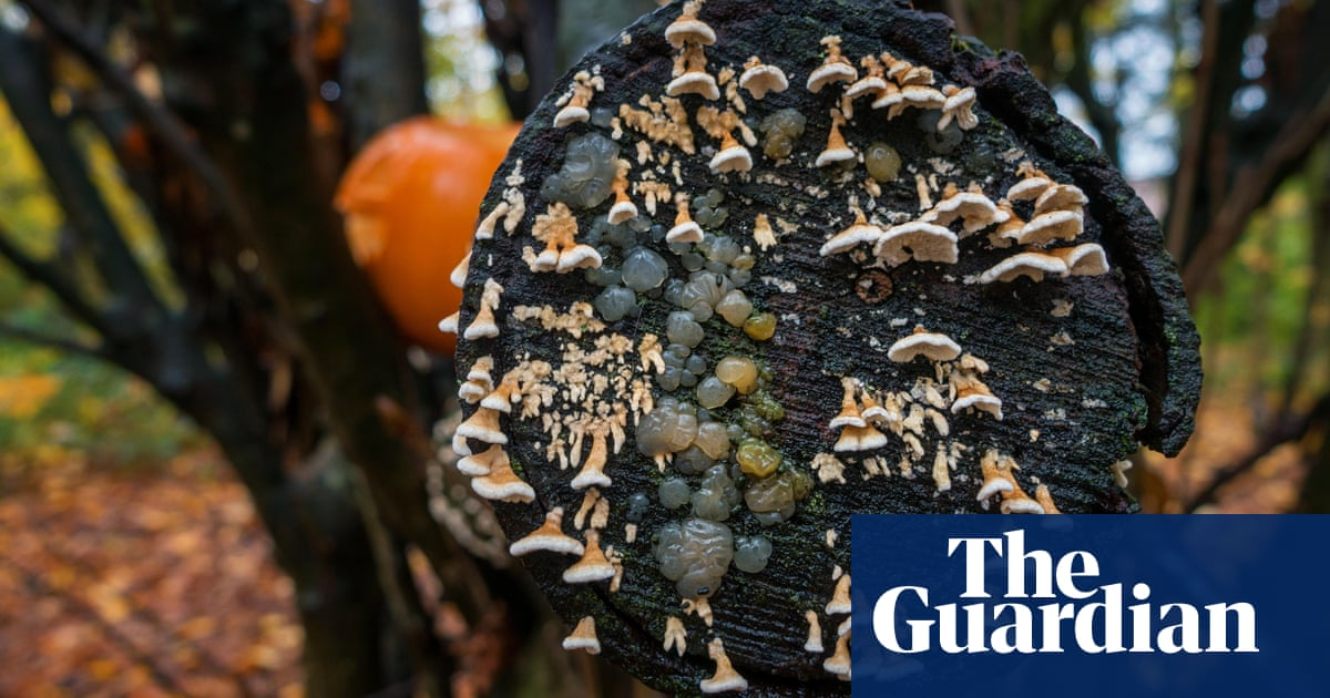 Crystal brains and witches' butter: discover the fabulous world of fungi