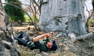 Branching out: Prince Harry takes a picture of Baobab trees in Liwonde National Park in Malawi