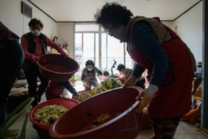 The cabbages are placed in large bowls