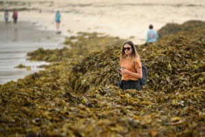 Sydney, Australia. A woman walks through a large pile of seaweed washed ashore on Coogee beach