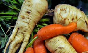 Oddly shaped parsnips and carrots