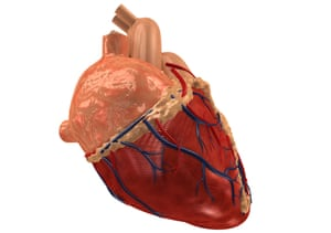 Freezing and rewarming sections of heart tissue successfully raises hopes for doing the same for the entire organ.