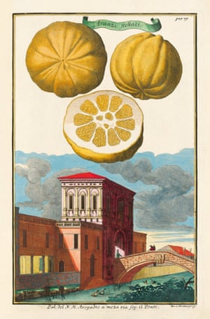 Illustrations and engravings of lemons and citrus fruit from the book by Iris Lauterbach called J C Volkamer. Citrus Fruits, published by Taschen.