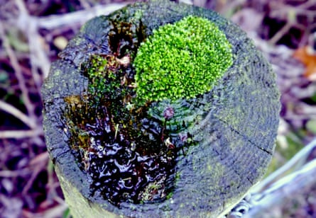 moss on a post top