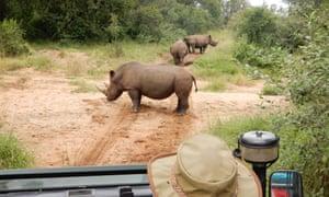 White rhino, Mkhaya, Eswatini