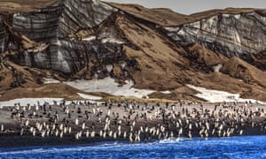 Potent pong … a chinstrap penguin colony on Deception Island.