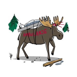 Hockey weed and taxes 11 canadian stereotypes debunked world illustration of a moose as an ambulance sciox Choice Image