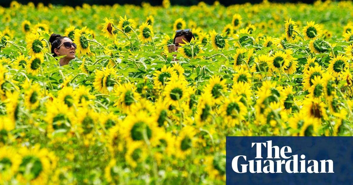 Farm Regrets Opening Fields After Social Media Butterflies Trample