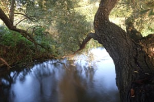 A big willow has thrown an arm across the river