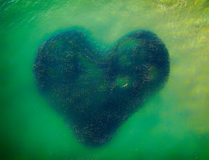 'Love Heart of Nature' by the Australian photographer Jim Picot is the overall winner. The shot immortalises a salmon school in New South Wales, forming the shape of a heart with a shark swimming inside it.