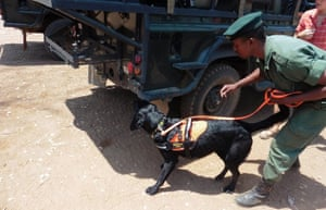 Ruger and a handler inspect a vehicle.