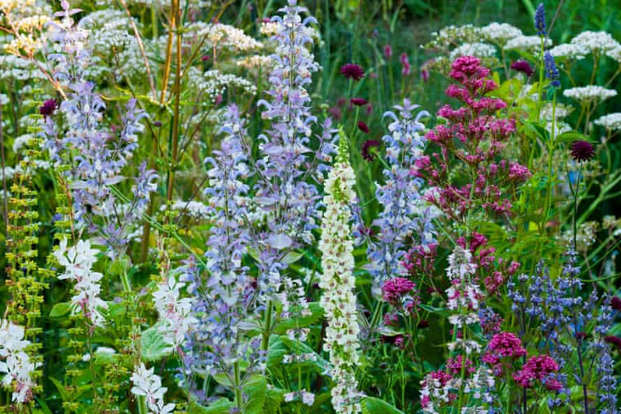 A wildlife-friendly border of clary sage, valerian, Macedonian scabious and centranthus