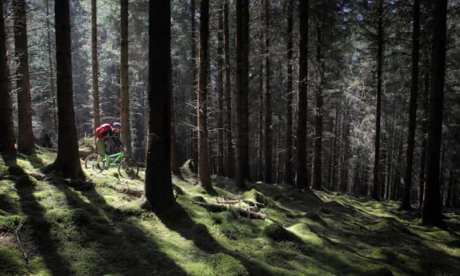 The ancient Caledonian forest forms part of the route