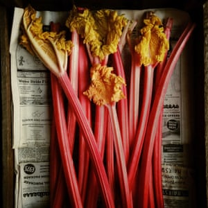 Rhubarb won first prize for Andrew Montgomery of Hampton Wick, United Kingdom in the Food section