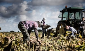 Victims in the agricultural sector are often eastern European men and women, who were promised a job by traffickers, or they could be individuals on the fringes of society, homeless or destitute.