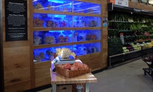 Smallhold 'farm' unit at a Whole Foods store containing mushrooms.