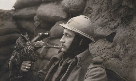 Owls brave the trenches in search of mice: Country diary 100 years ago