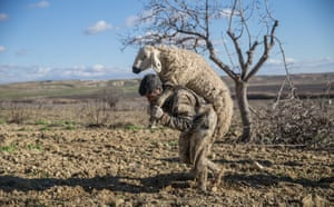 A man carries a sheep after it was rescued from mud in Sanliurfa.
