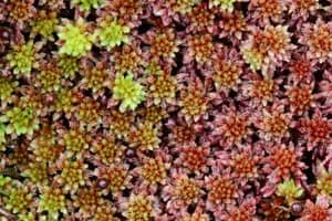 Sphagnum moss is famed for its medicinal properties and absorbency and is one of the crops being grown as part of the project.
