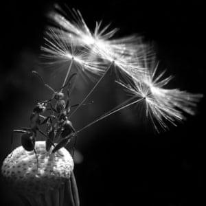 CIWEM Environmental Photographer of the Year winner,  2009, Bolucevschi Vitali Nicolai from Moldova's image 'Talking About Stars