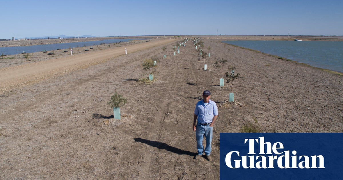 Australia spends billions planting trees – then wipes out carbon gains by bulldozing them