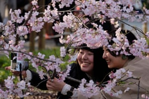 Friends photograph the blooms in Tokyo