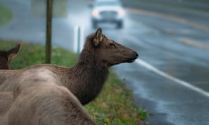 Increasing numbers of outdoor recreationists – everything from hikers, mountain bikers and backcountry skiers to Jeep, all-terrain vehicle and motorcycle riders, aren't good for Elk populations.