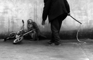 """<a href=""""http://www.worldpressphoto.org/collection/photo/2015/nature/yongzhi-chu"""">World press photo, February</a><br>First prize, nature singles category: Chu Yongzhi, China, Zhejiang Daily Press Group won with this picture of a monkey being trained for a circus cowering as its trainer approaches in Suzhou."""