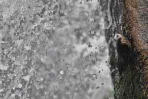 Overall student winner - Waterfall Swift by Pablo Javier Merlo (Nacional University of Cordoba (Argentina)