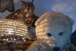 Owl and bear What's next?Photograph: RaymondPearce/GuardianWitness