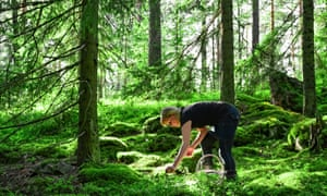 Woman picking wild blueberries and mushrooms in forest, Finland