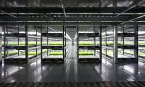 Spread's indoor lettuce farm in Kameoka, Kyoto prefecture, in 2012
