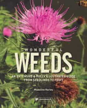 Wonderful Weeds by Madeline Harley (book cover)