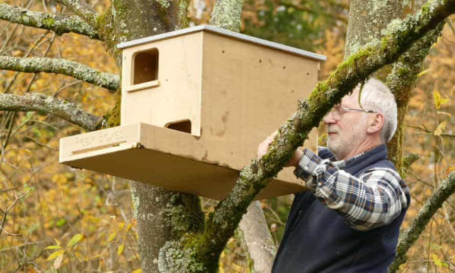 A box for kestrels or barn owls being fitted in a tree
