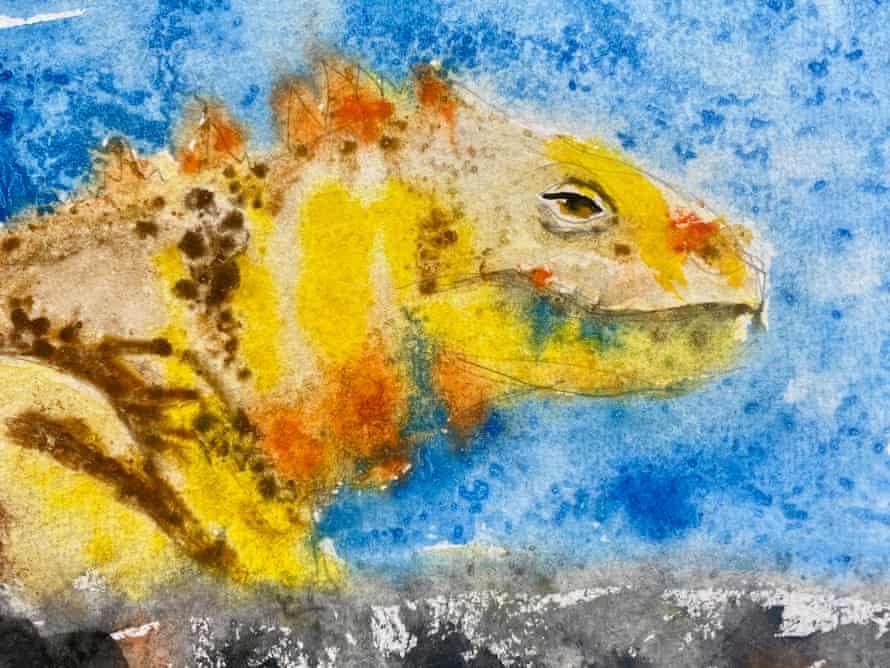The writer's iguana.
