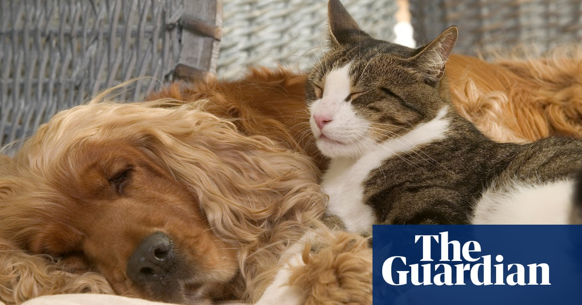 A dog's (and cat's) place is on the bed | Brief letters