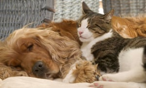 Pets At Home Do Cats And Dogs Really Fight Like Cats And Dogs