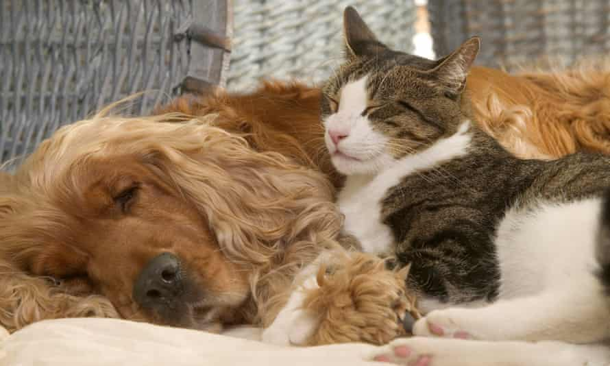 Cat and dog sleeping together.