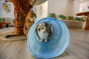 Customers can relax among purring felines or adopt a stray cat at the cafe.