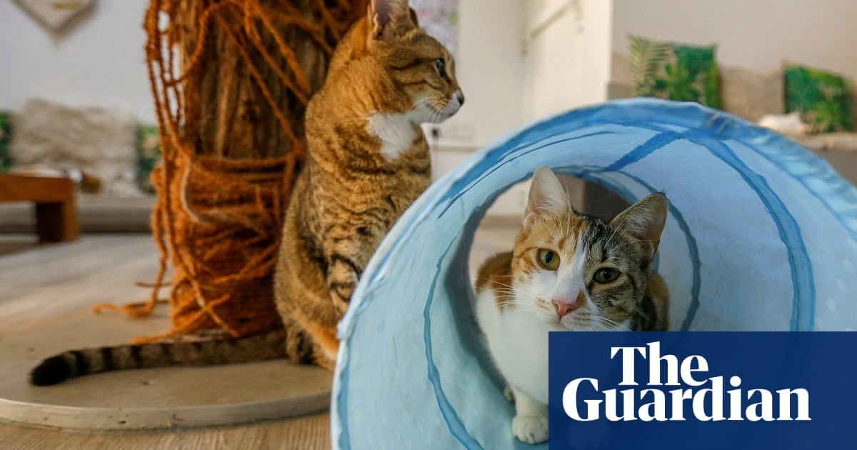 Dubai's stray cat cafe - in pictures