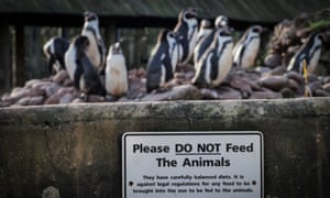 Penguins at South Lakes Safari zoo